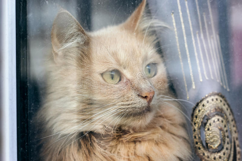 Gato rojo que se sienta en el travesaño de la ventana y que mira a través fotos de archivo