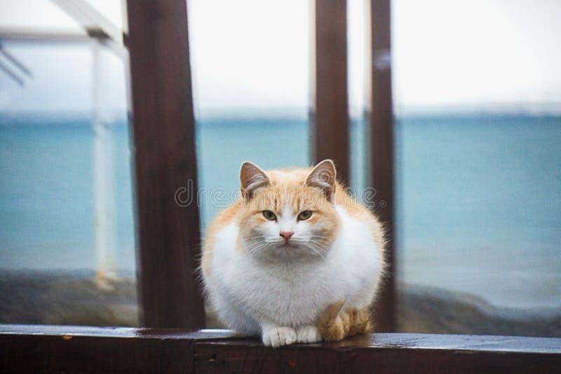 Gato rojo sin hogar, el fondo - la playa fotos de archivo