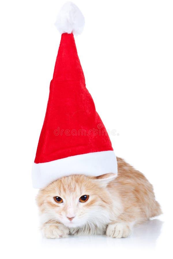 Gato rojo y blanco que desgasta un sombrero de santa fotos de archivo