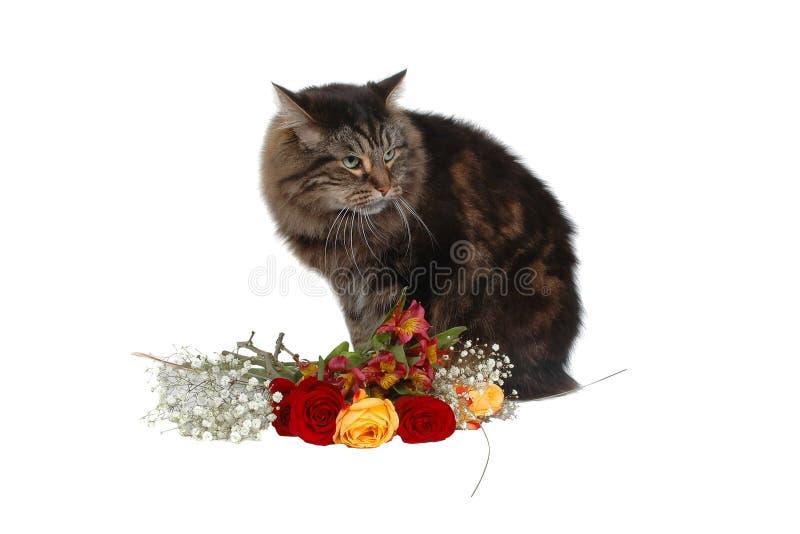 Gato romántico 2 fotografía de archivo libre de regalías