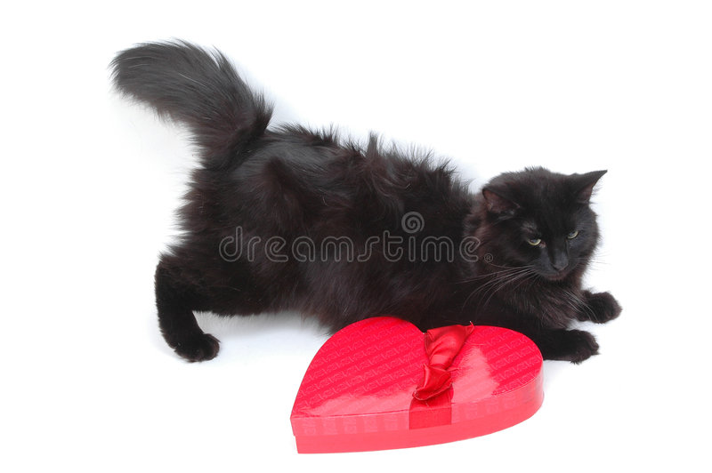 Gato romántico 6 foto de archivo