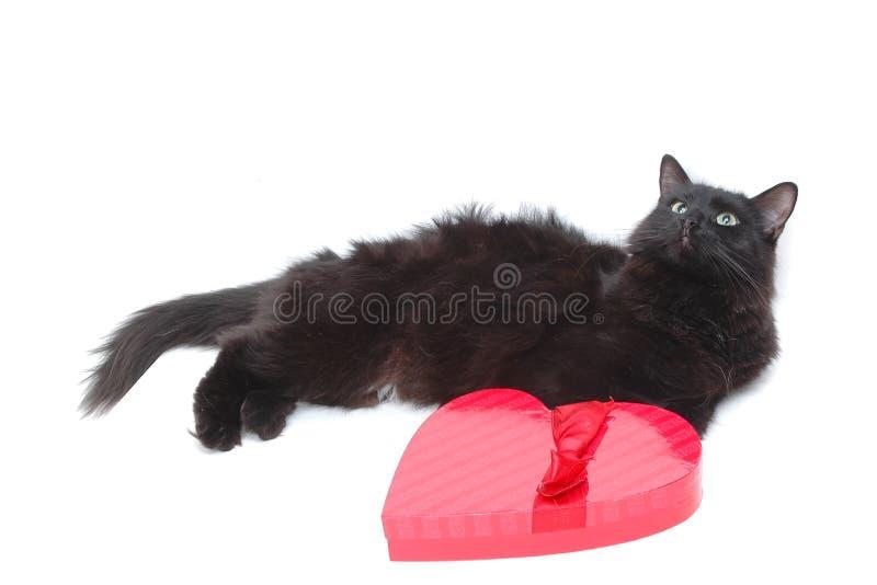 Gato romántico 7 imagen de archivo
