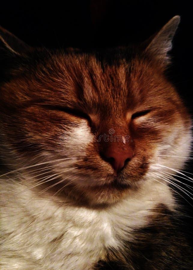 Gato sábio fotografia de stock