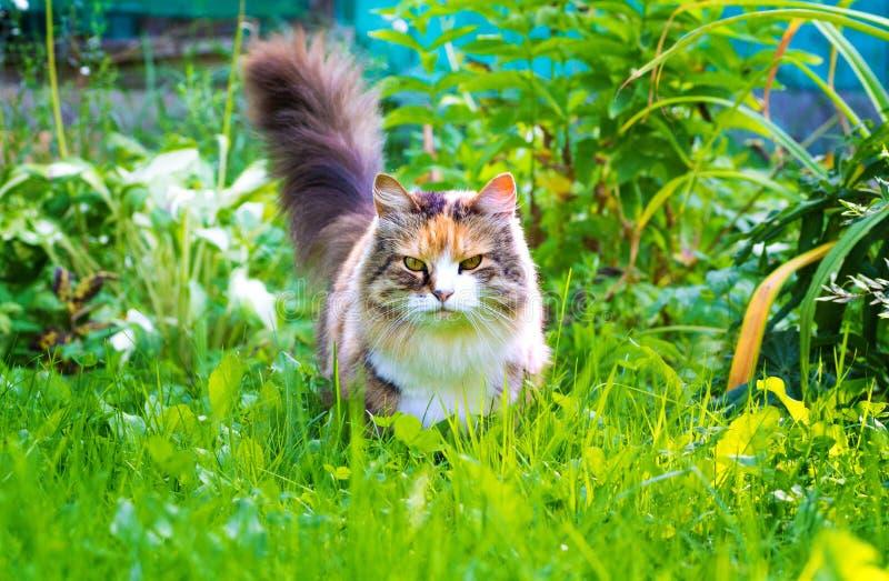 Gato sério bonito que olha a câmera, fora em um parque na grama verde foto de stock royalty free