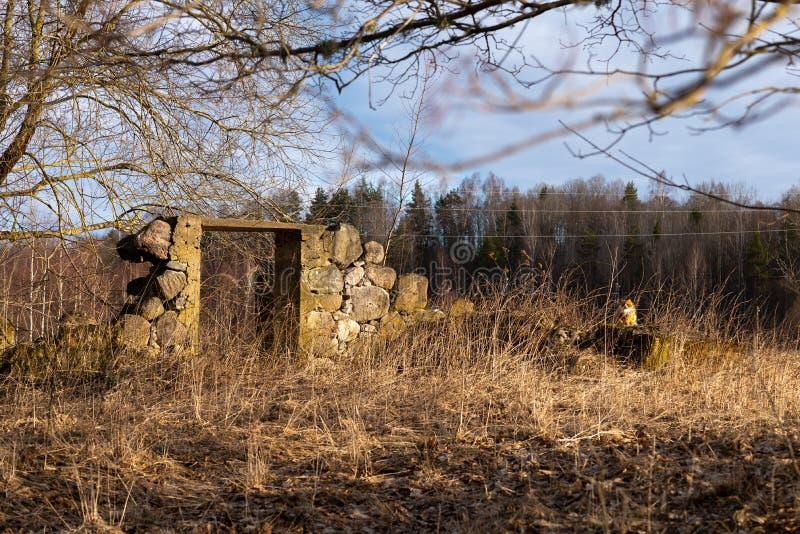Gato só perto das ruínas Conceito da solid?o imagens de stock