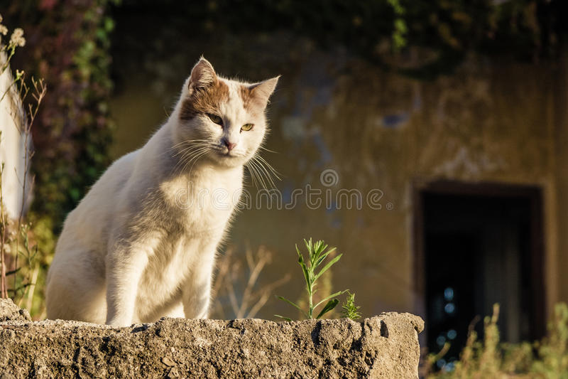 Download Gato Salvaje Blanco Con Los Modelos Amarillos Imagen de archivo - Imagen de lovable, abajo: 41903057