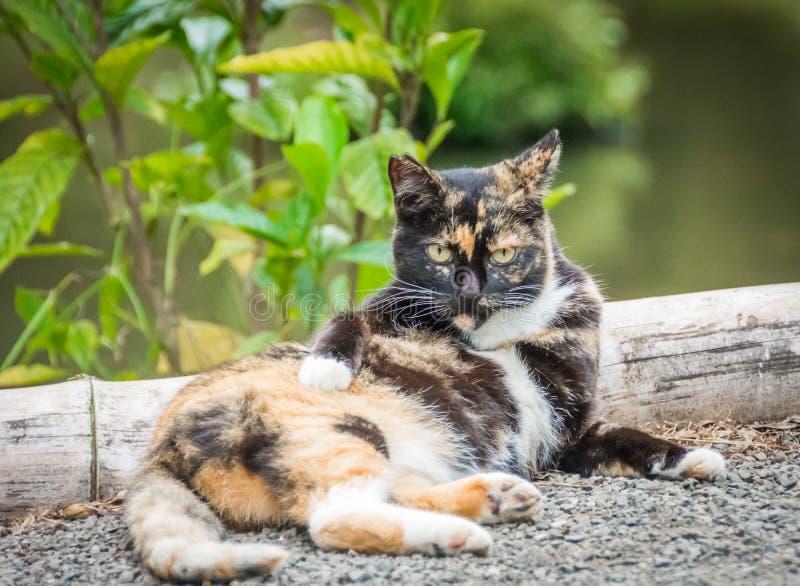 Gato salvaje que espacia hacia fuera foto de archivo libre de regalías