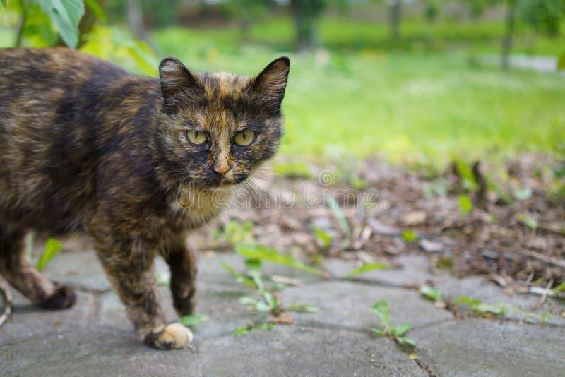 Gato salvaje sin hogar de la bestia con una mirada incrédula que se prepara para correr foto de archivo