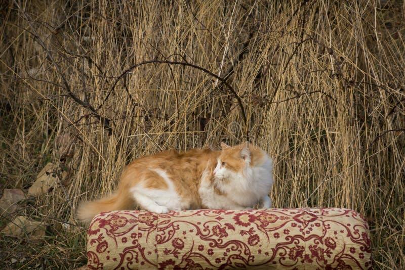 Gato Scared foto de stock royalty free