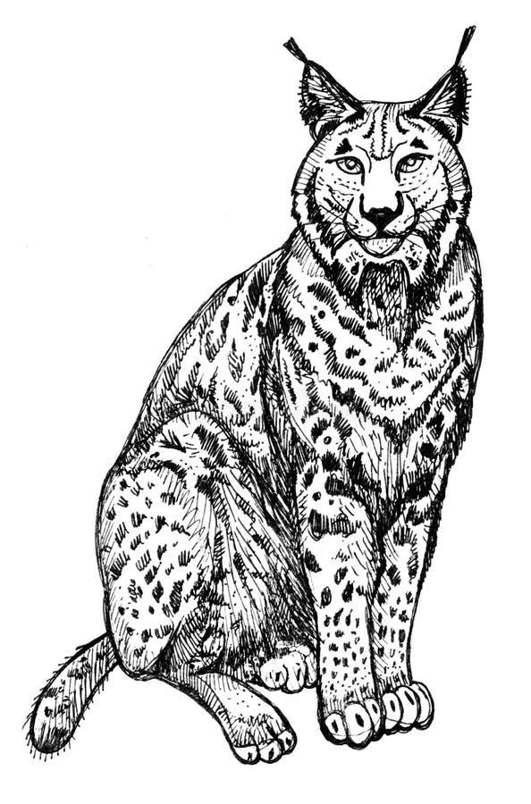 Gato selvagem lynx Clipart para o trabalho de arte e o projeto do weddind ilustração royalty free