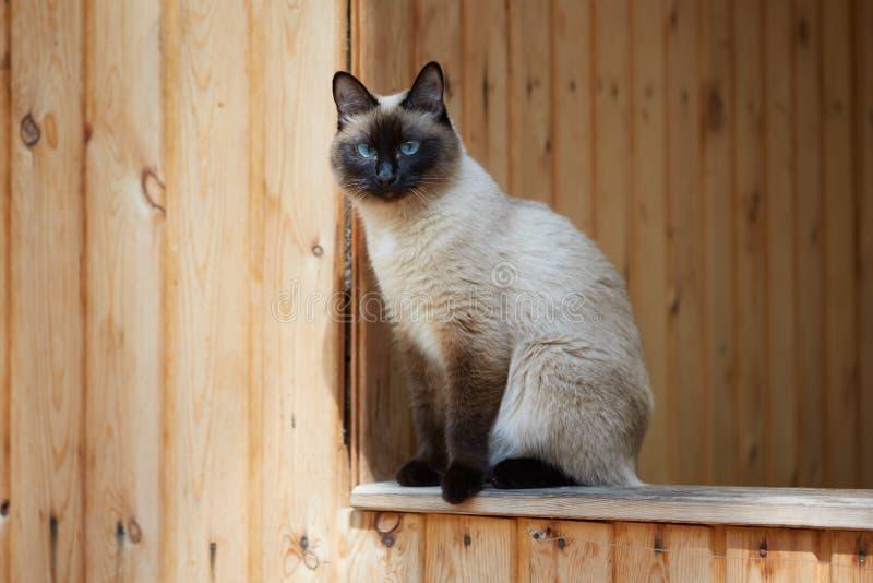 Gato siamés que se sienta en la verja de una casa de madera foto de archivo