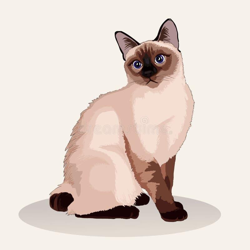 Gato siamés Raza del gato Animal doméstico preferido Gatito mullido precioso con los ojos verdes Ilustración realista del vector stock de ilustración