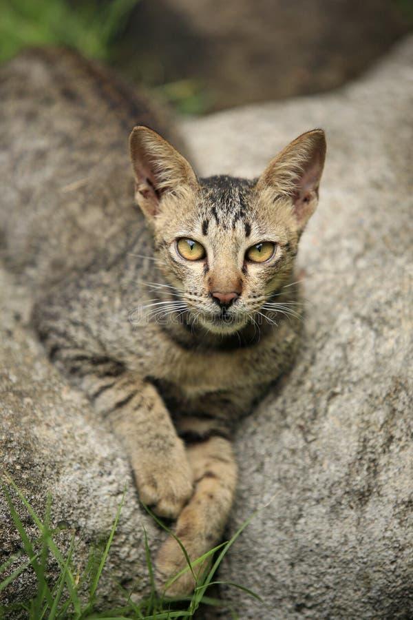 Gato sin hogar fotos de archivo