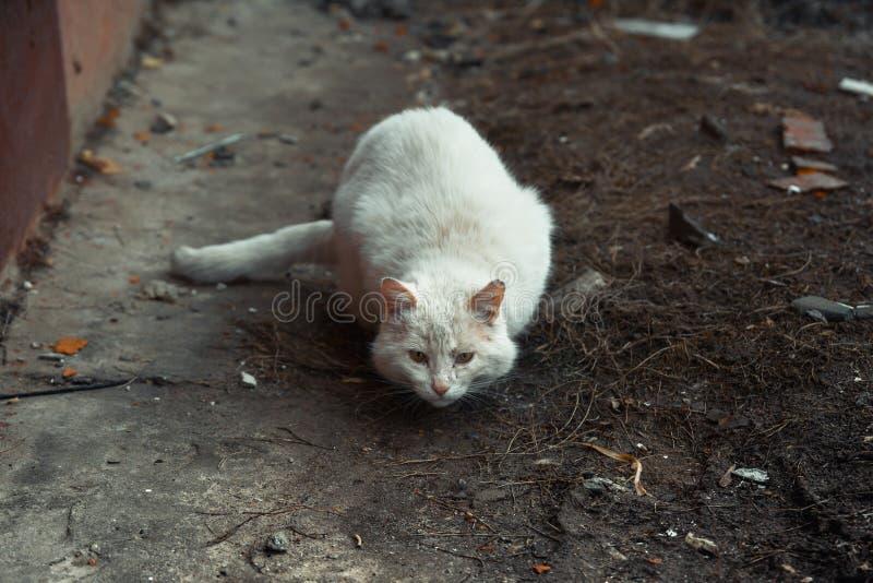 Gato sin hogar blanco fotos de archivo