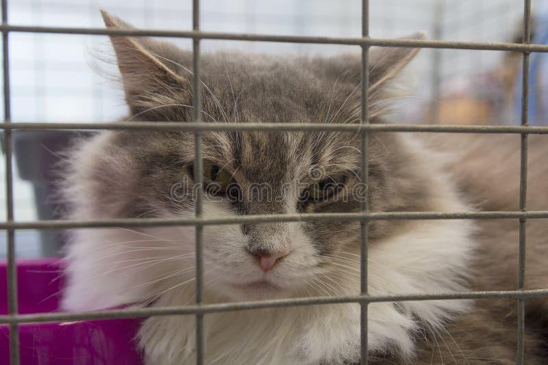 Gato sin hogar en una jaula imagen de archivo
