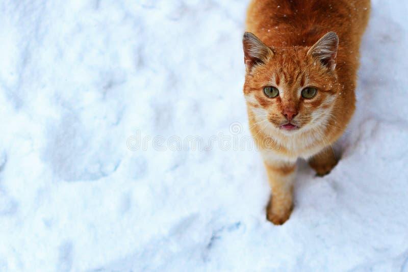Gato sin hogar pelirrojo fotos de archivo libres de regalías