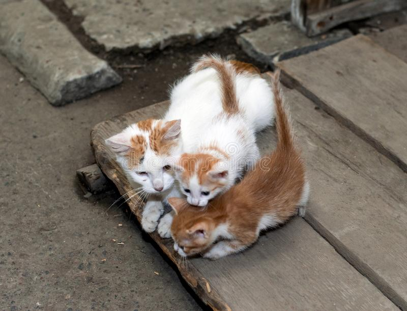 Gato sin hogar pelirrojo con dos gatitos fotos de archivo libres de regalías
