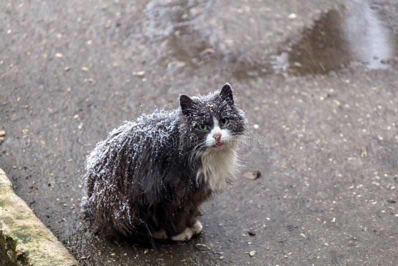 Gato sin hogar fotos de archivo libres de regalías