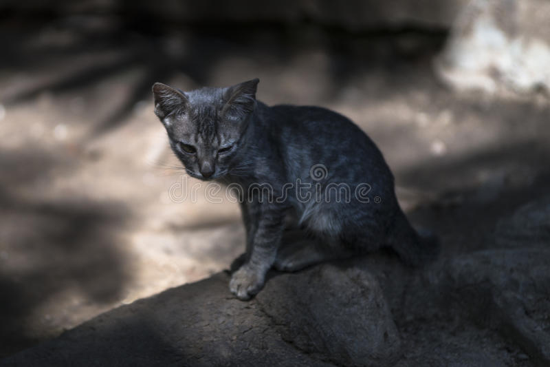 Gato sin hogar sucio imagenes de archivo