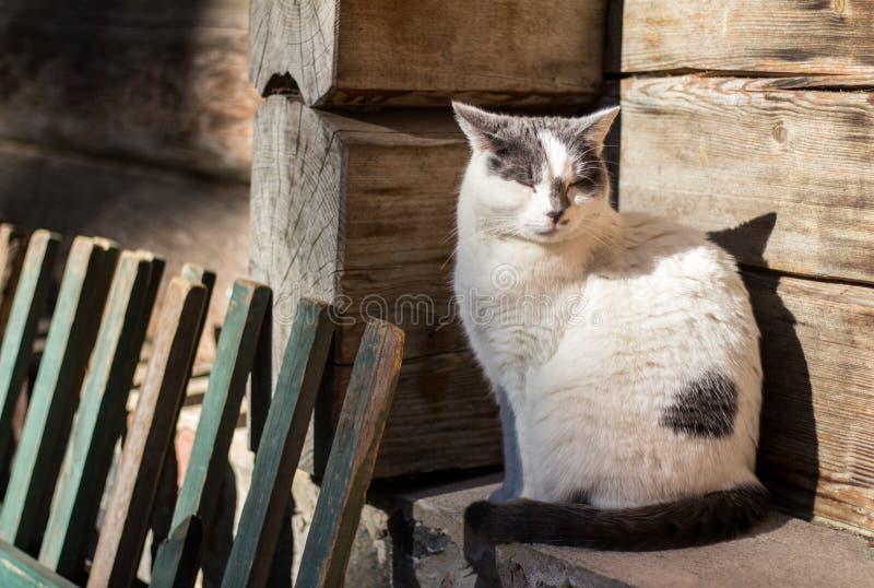 Gato soñoliento al lado de la casa del pueblo fotos de archivo libres de regalías