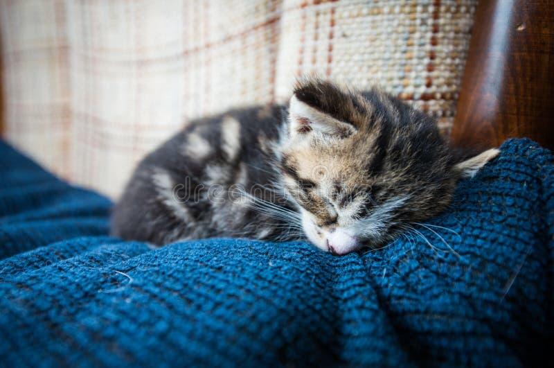 Gato soñoliento del bebé en el sofá imágenes de archivo libres de regalías