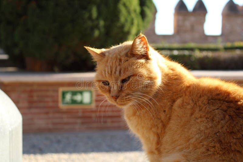 Gato soñoliento en las escaleras foto de archivo libre de regalías