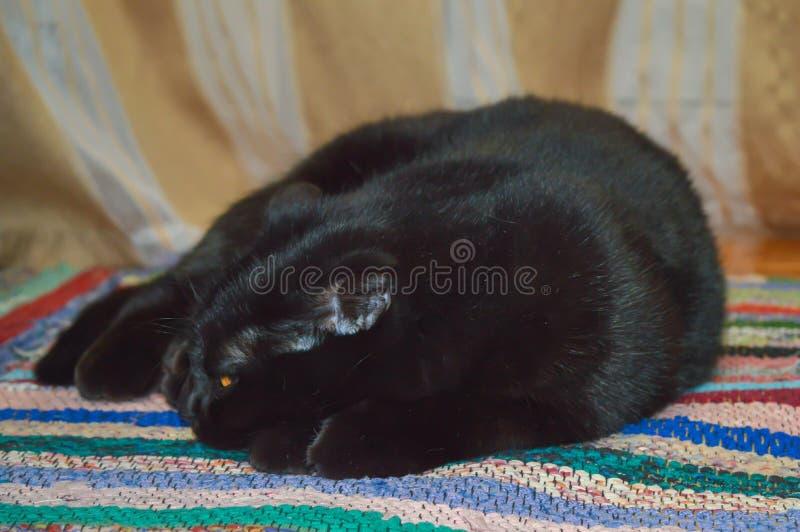 Gato soñoliento negro imagen de archivo