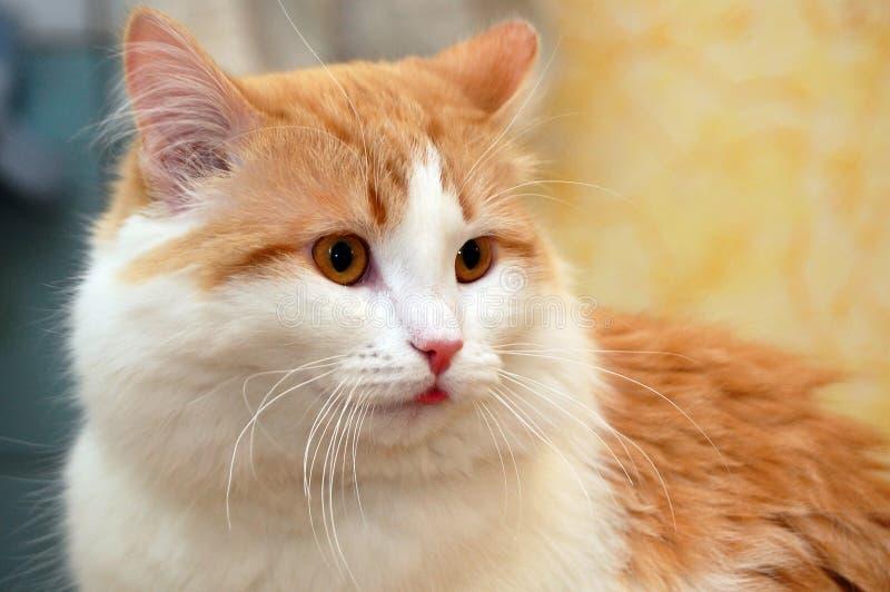 Gato sobresaltado imagenes de archivo