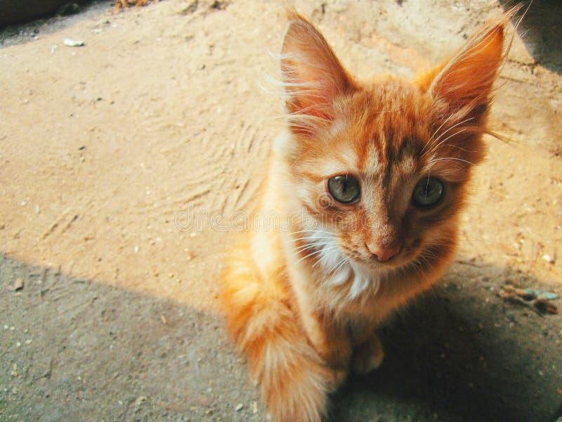 Gato solar fotografía de archivo libre de regalías