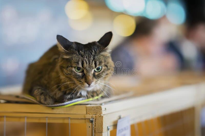 Gato solo sin hogar triste con una mirada asustada, mintiendo en el inshelter de la jaula que espera un hogar, para que alguien l fotografía de archivo