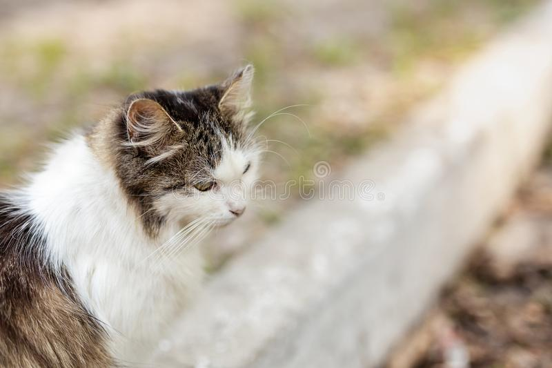 Gato solo triste mullido de la calle que se sienta en el camino en la calle de la ciudad Animal doméstico sin hogar abandonado al imagenes de archivo