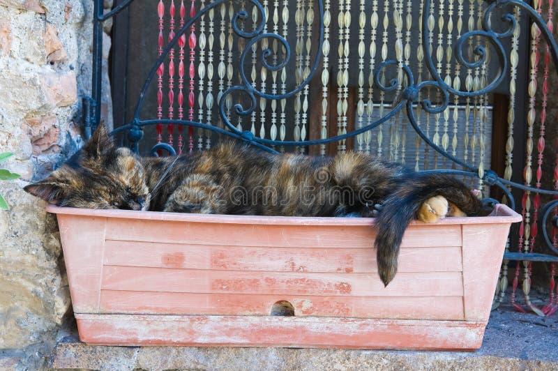 Gato sonolento. fotos de stock royalty free