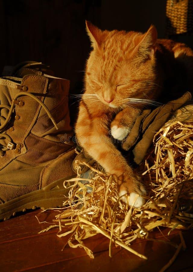 Gato sonolento da exploração agrícola foto de stock royalty free