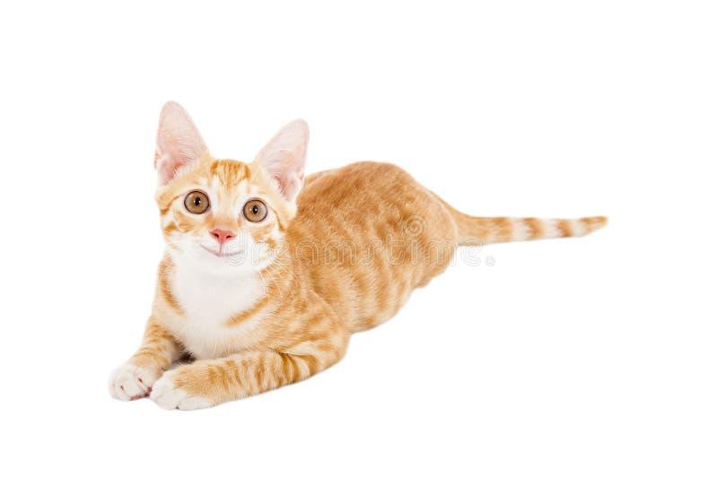 Gato sonriente que mira para arriba imagen de archivo libre de regalías