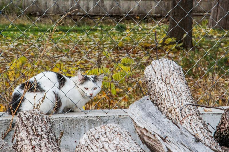 Gato sospechoso detrás de una cerca de la tela metálica de un parque público en el pueblo búlgaro de Debnevo fotos de archivo