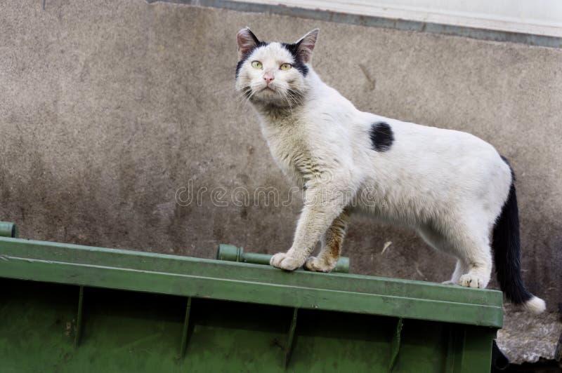 Gato sucio, perdido que se coloca en el envase asqueroso de la basura foto de archivo