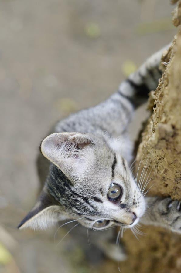 Gato tailandês pequeno na árvore. imagens de stock royalty free