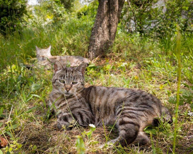 Gato tirado en la hierba fotografía de archivo