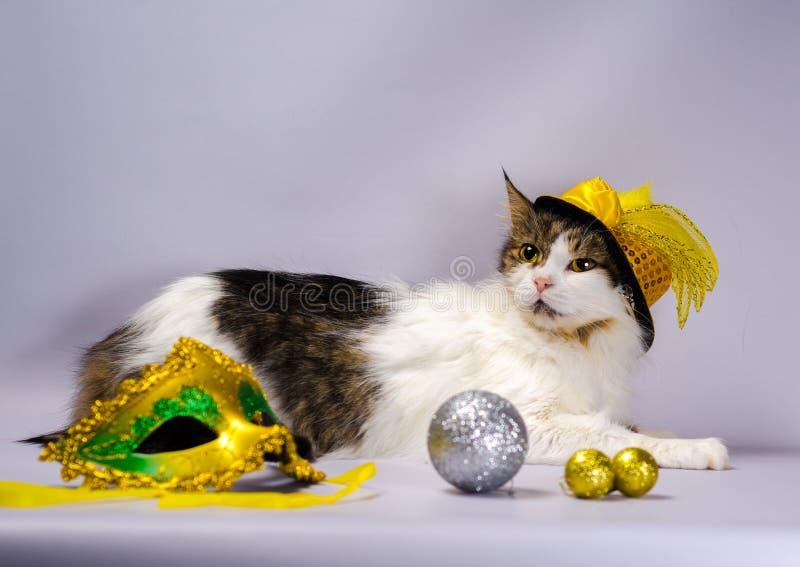 Gato travieso en un sombrero amarillo del carnaval con las lentejuelas y una pluma n foto de archivo
