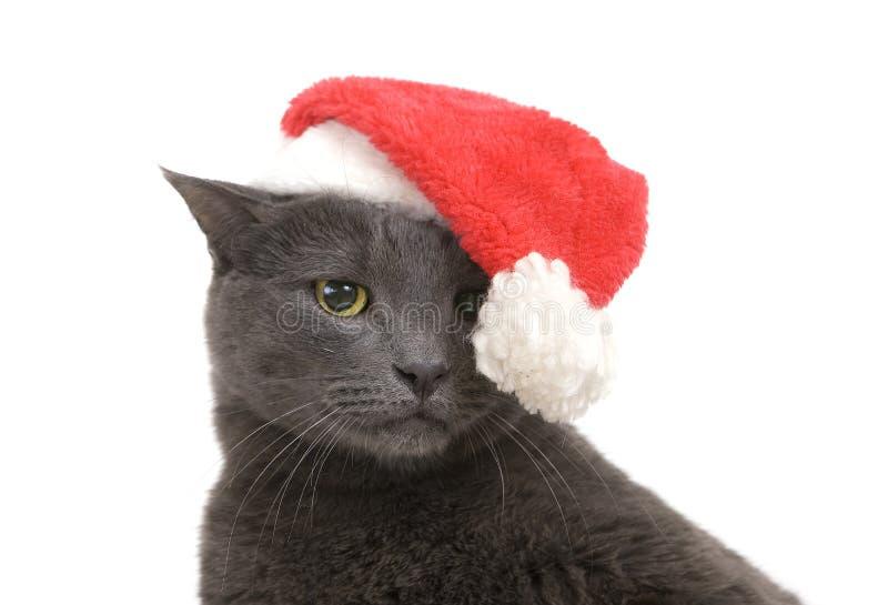Gato triste de la Navidad - Gray Cat Santa fotos de archivo