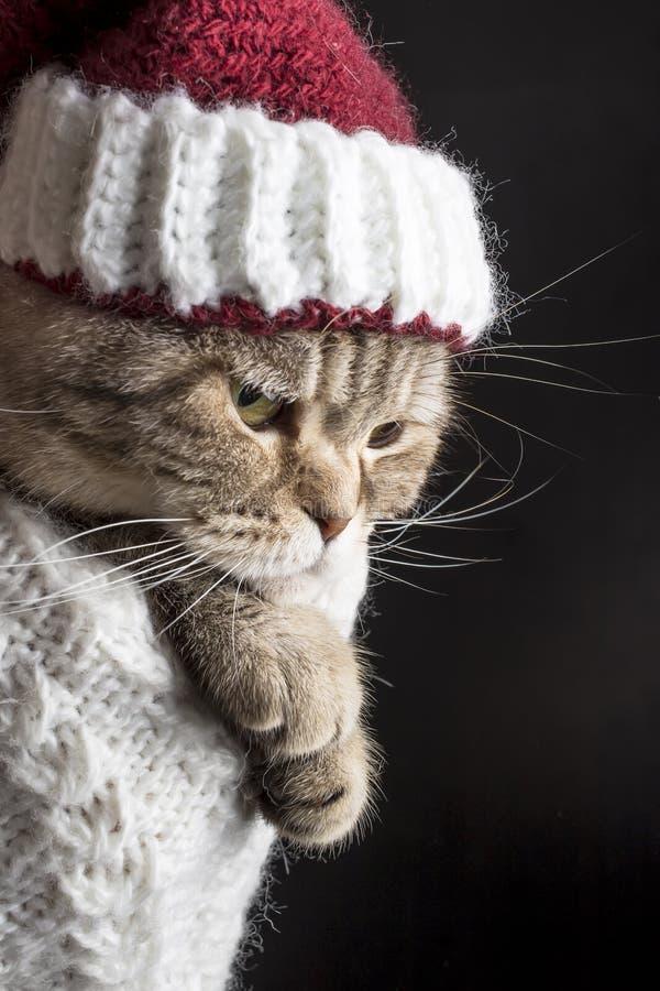 Gato triste divertido en un sombrero de la Navidad de Santa Claus imagen de archivo