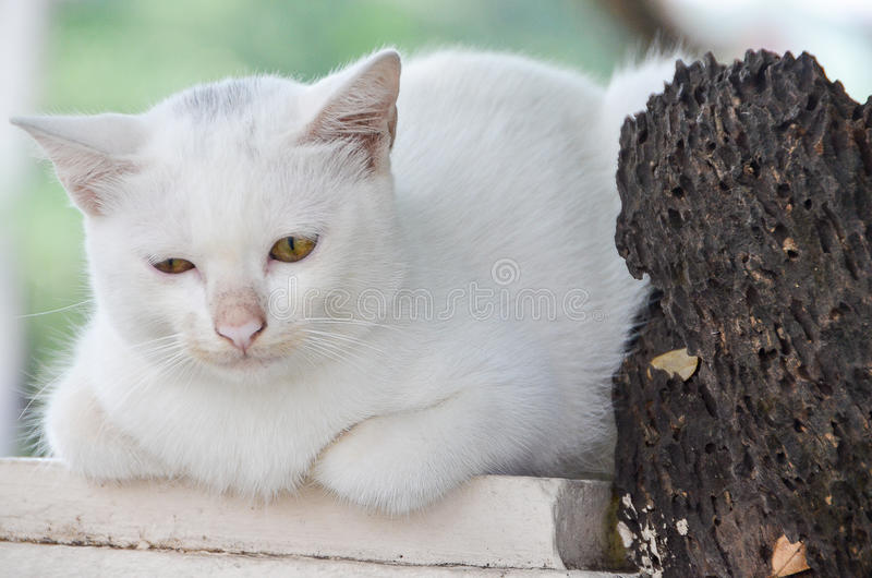 Gato triste que encontra-se em um polo e em uma árvore seca velha fotos de stock royalty free