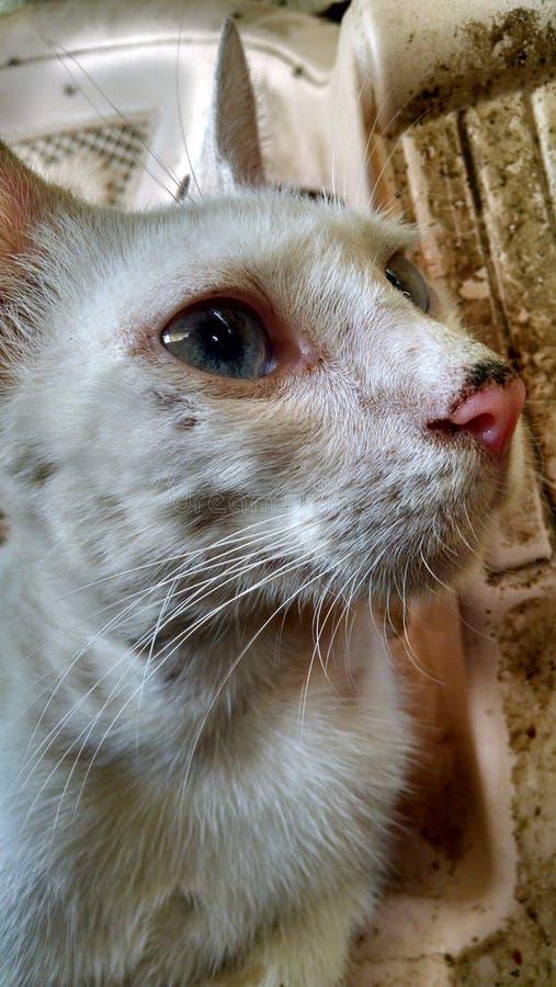 Gato urbano foto de archivo libre de regalías