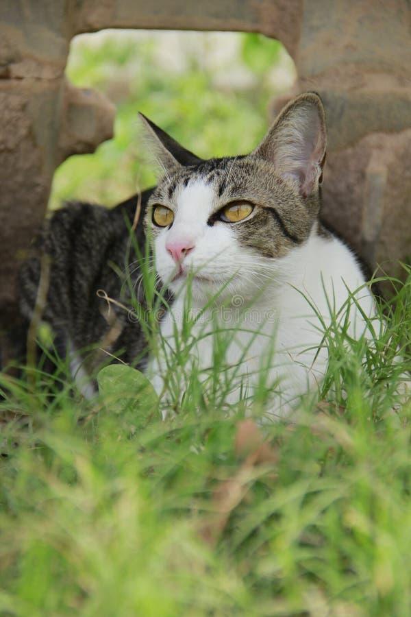 Gato vago foto de stock royalty free