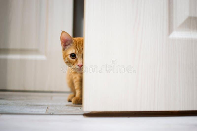 Gato vermelho bonito foto de stock royalty free