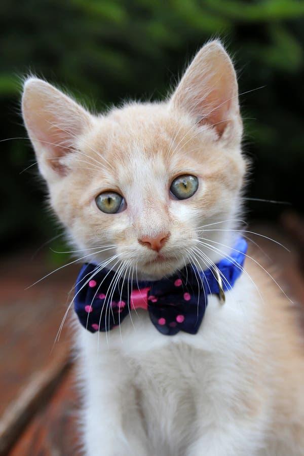 Gato vermelho bonito com laço fotos de stock royalty free