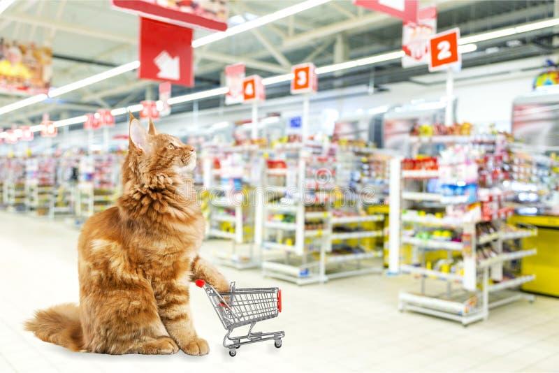 Gato vermelho bonito com o carrinho de compras na loja imagens de stock royalty free