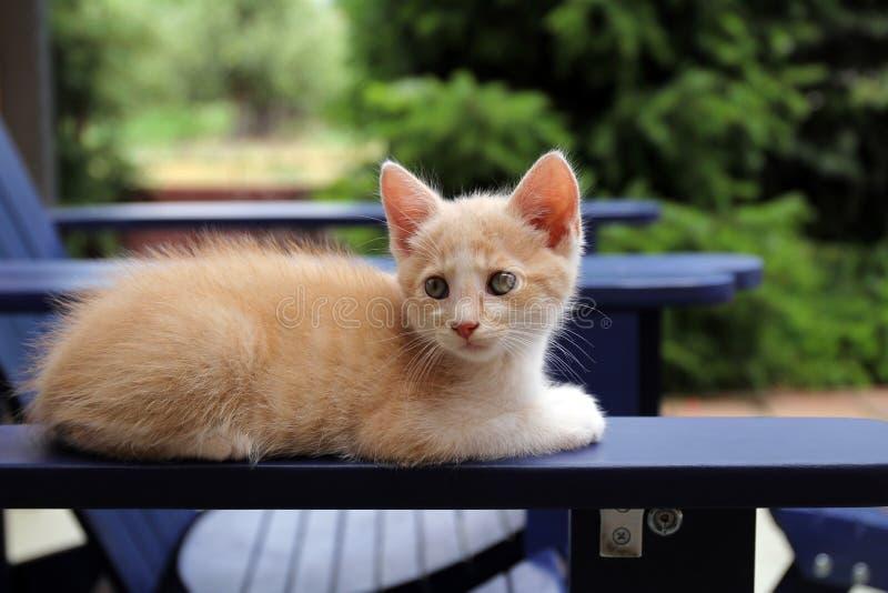 Gato vermelho bonito que descansa em uma cadeira fotografia de stock royalty free