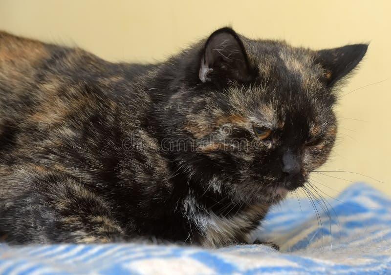 Gato vermelho desagradado com preto fotos de stock royalty free