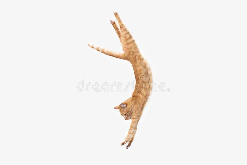 Gato vermelho em um fundo branco fotos de stock royalty free